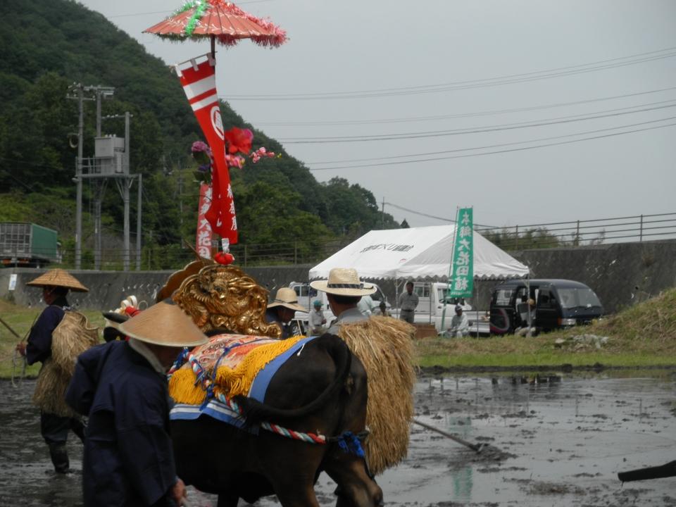 2018年5月 花田植え