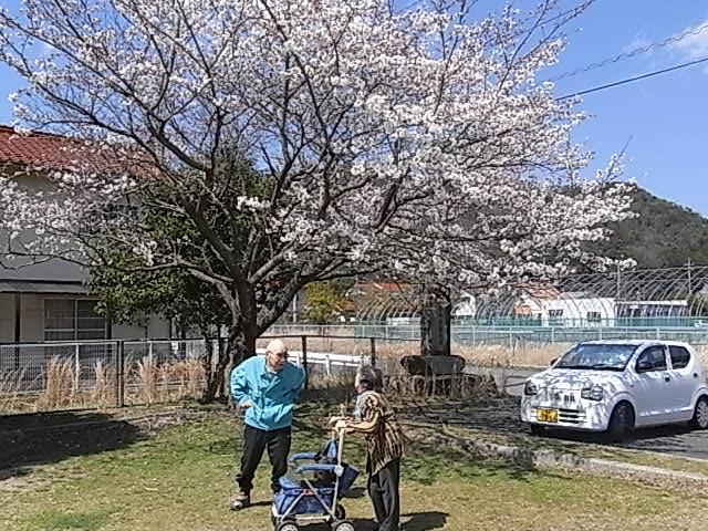 4月4日・5日 お花見会(吉田町の大浜運動公園にて)