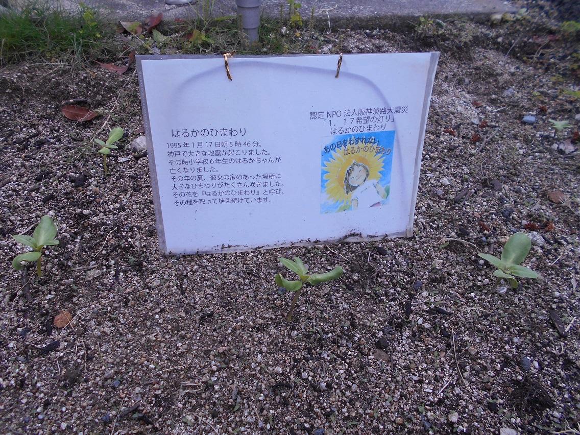 2019年5月1日「ひまわり」 5日5日「湯楽苑おやつ」