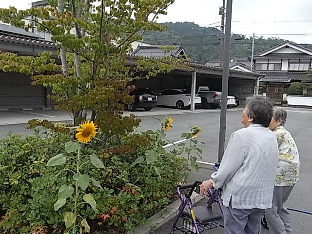2019年8月「はるかのひまわりの開花」