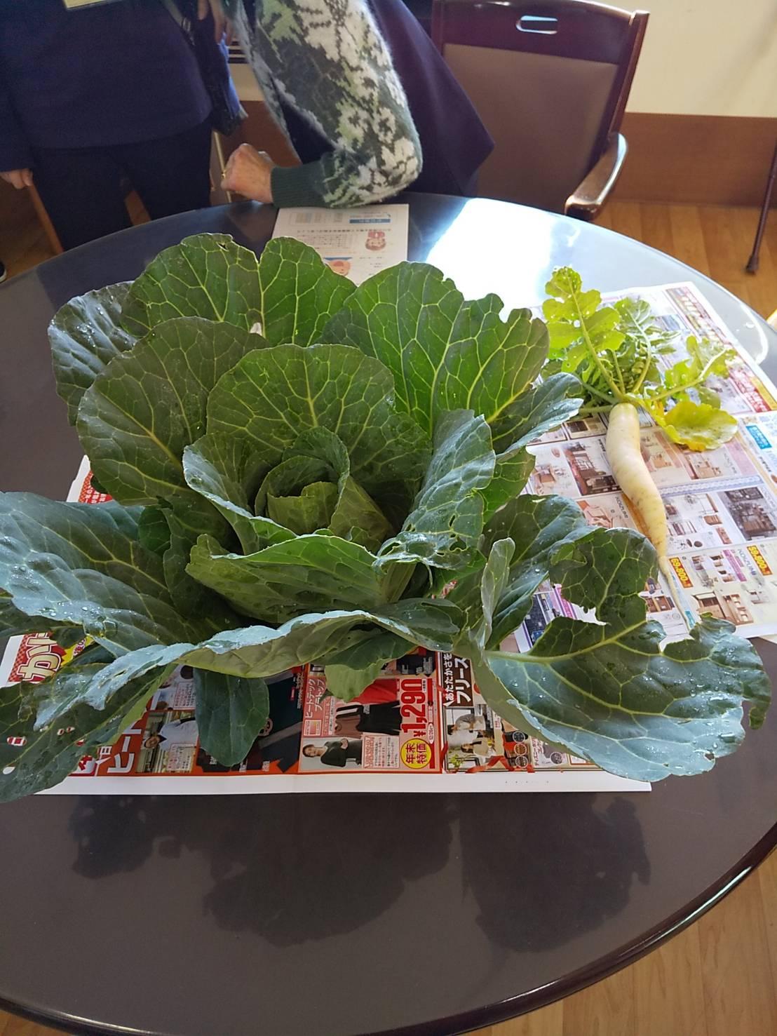 畑で採れた白菜