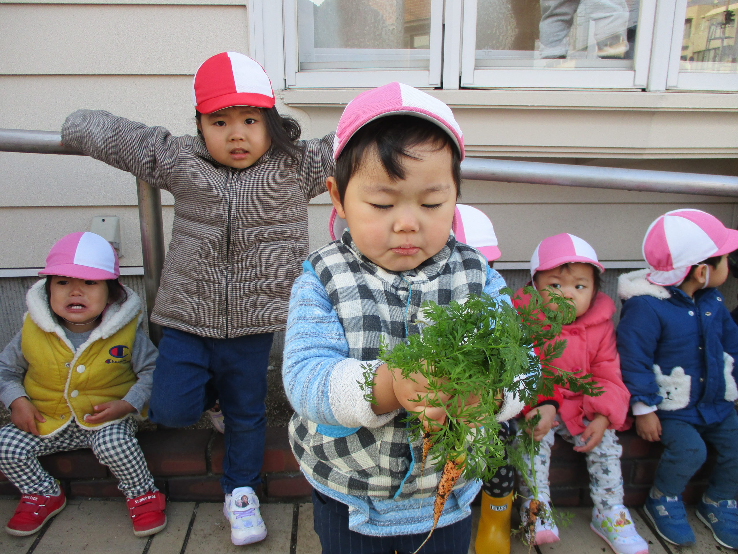 2020年1月「冬野菜の収穫」