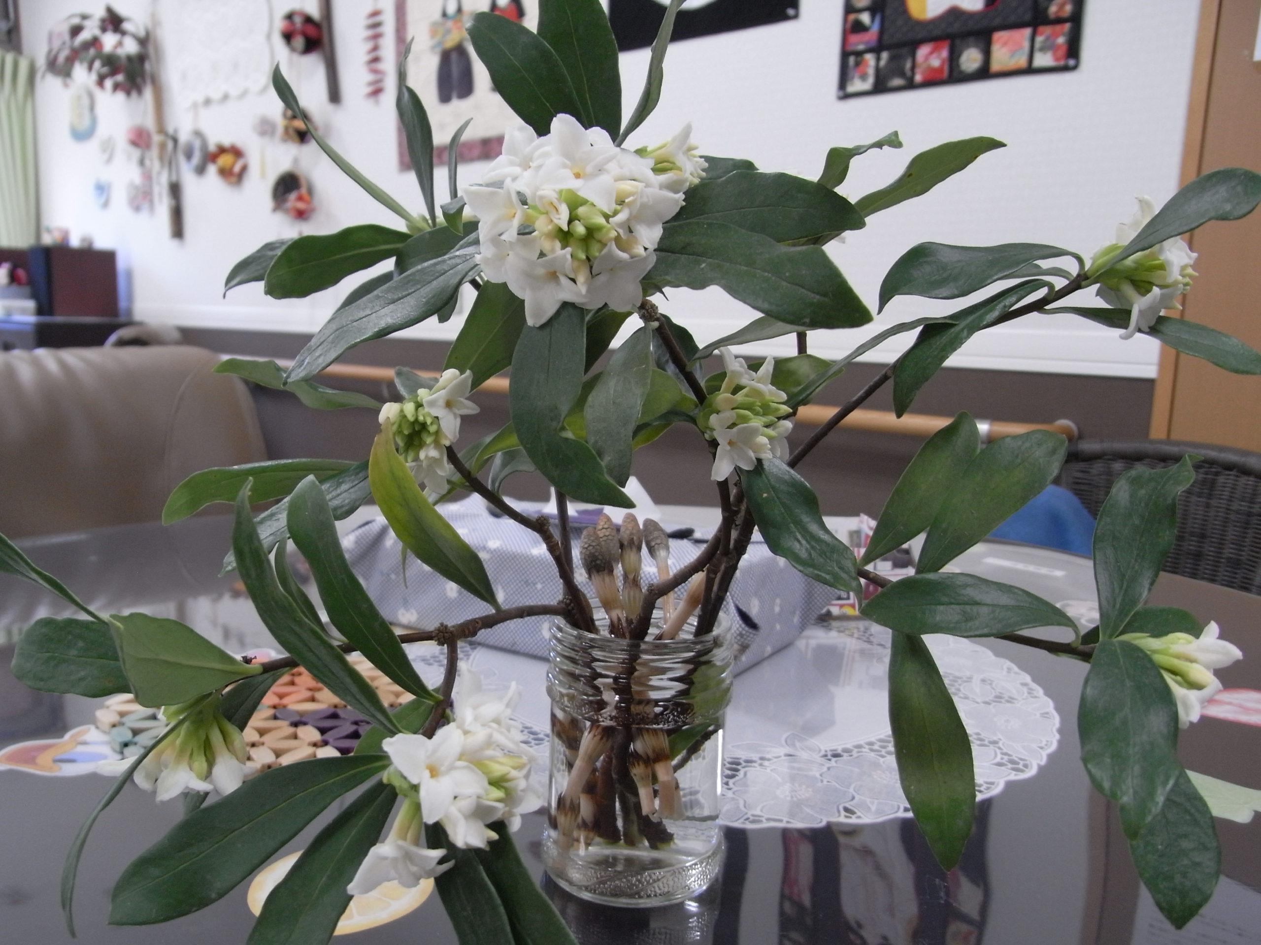 2020年3月「春です!つくしと沈丁花で感激!」