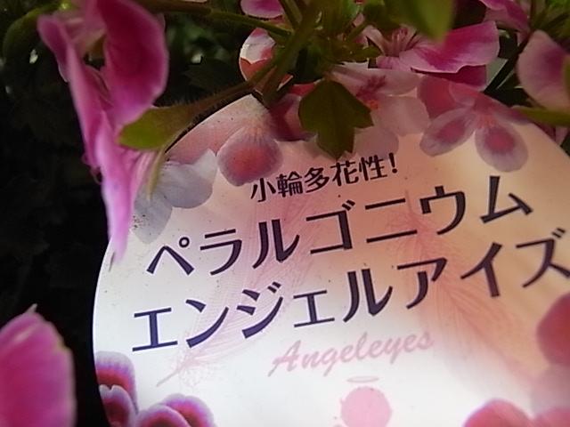 2020年9月「お花を頂きました」