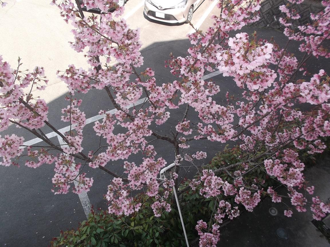 2021年4月4日「春ですね」