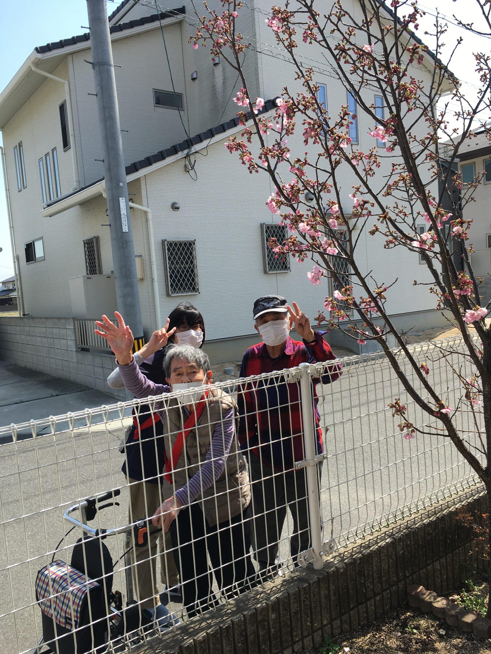 2021年4月 桜